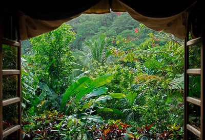 View out Cocoa Cottages living room   (Mar 20, 2006, 05:48pm)  This is a picture taken from inside the living room area at the Cocoa Cottages.  This set of doors opens West, giving one a view of the lush foliage that makes up much of Dominica.
