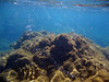 <b>Bubbles at Champagne Reef</b>   (Mar 20, 2006, 11:03am)  <p align=left>Champagne Reef is so named because of the bubbles (as seen in this picture) that rise from the sea floor.  The bubbles come from sulfur vents, and are caused by volcanic activity.</p>