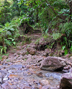 "Path down to breakfast river   (Mar 21, 2006, 09:12am)  hiking time: 65 mins   After hiking for just over a hour (with some stops for observing nature), we reach the ""breakfast river"" (the Trios Pitons River).  The water is cool and clean for drinking and we have a brief chance to refresh ourselves before the steep part of the hike.  The path in the background leads back to the start of the hike."
