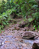 "<b>Path down to breakfast river</b>   (Mar 21, 2006, 09:12am)  hiking time: 65 mins   <p align=left>After hiking for just over a hour (with some stops for observing nature), we reach the ""breakfast river"" (the Trios Pitons River).  The water is cool and clean for drinking and we have a brief chance to refresh ourselves before the steep part of the hike.  The path in the background leads back to the start of the hike.</p>"