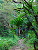 <b>Trail starts in rain forest</b>   (Mar 21, 2006, 08:19am)  hiking time: 14 mins   <p align=left>The boiling lake hike starts off in the rain forest.  The initial path is mostly flat and the vegetation is quite thick.</p>