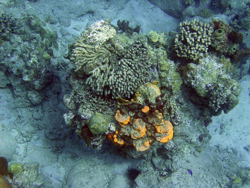 <b>Coral mounds</b>   (Mar 23, 2006, 09:58am)  <p align=left>I believe that the orange stuff is some type of shelf coral, but I cannot be sure.  This was seen at Cannon Site in Douglas Bay.</p>