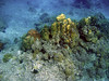 <b>Star coral formations</b>   (Mar 23, 2006, 09:58am)  <p align=left>Here is a mix of coral formations from the Cannon Site snorkeling stop.</p>