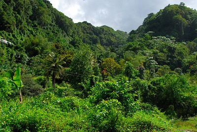 Small house hidden in the rain forest   (Mar 24, 2006, 09:44am)  This view is a few minutes outside of Roseau.  If you look closely, you can see a building hidden in the foliage.