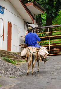 Alternate form of transportation   (Mar 24, 2006, 10:36am)  During our car tour, somewhere in the Southwest corner of Dominica, I spied this person, going up the hill.