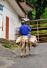 <b>Alternate form of transportation</b>   (Mar 24, 2006, 10:36am)  <p align=left>During our car tour, somewhere in the Southwest corner of Dominica, I spied this person, going up the hill.</p>