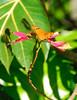 <b>Julia Heliconian butterfly</b>   (Mar 25, 2006, 09:58am)