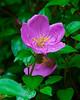 <b>Purple flower with rain drops</b>   (Mar 25, 2006, 06:53am)