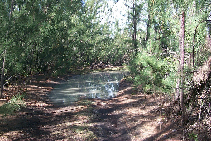 <b>Big Puddle Blocking Car Access To Goulding Cay</b>   (Apr 16, 2000, 04:35pm)