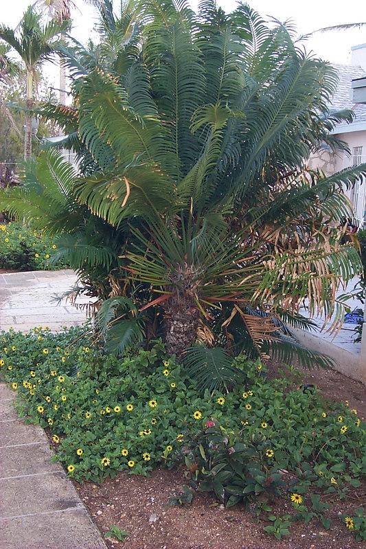 <b>Plantings Outside House</b>   (Apr 18, 2000, 07:21am)