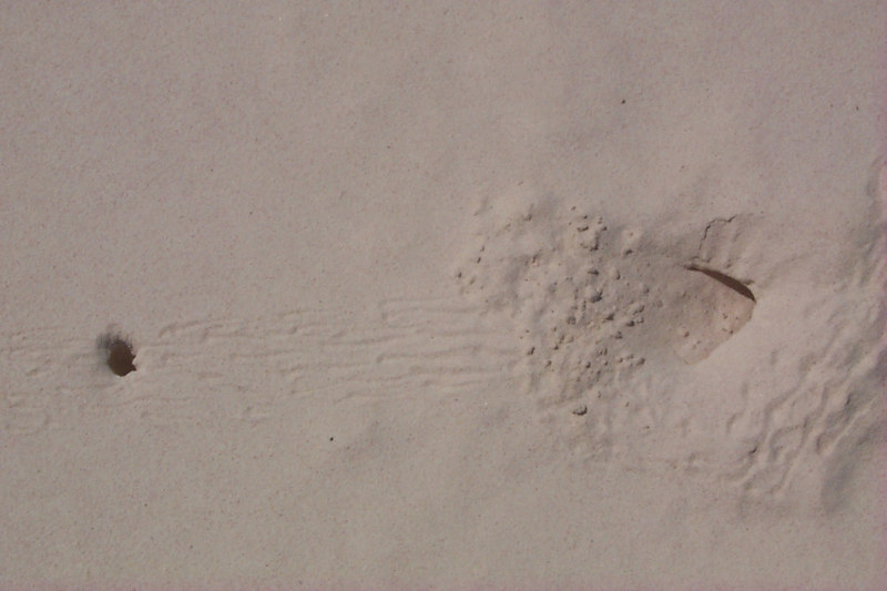 <b>Crab Holes with Footprints</b>   (Apr 19, 2000, 02:48pm)