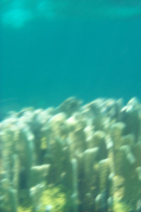 Underwater Photography is Hard   (Apr 19, 2000, 11:10am)