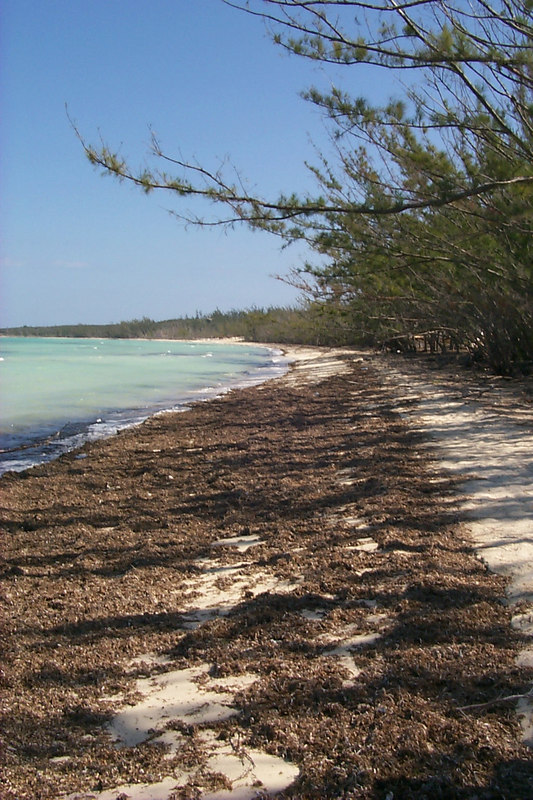 <b>Alabaster Bay Beach</b>   (Apr 19, 2000, 10:18am)