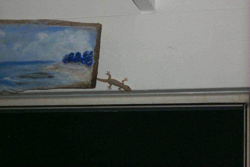 <b>Lizard at Rainbow Inn</b>   (Apr 19, 2000, 07:56pm)