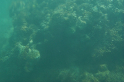 This Underwater Picture Almost Came out   (Apr 19, 2000, 10:52am)