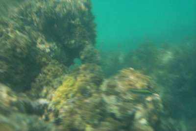 My Best Underwater Picture   (Apr 19, 2000, 10:53am)