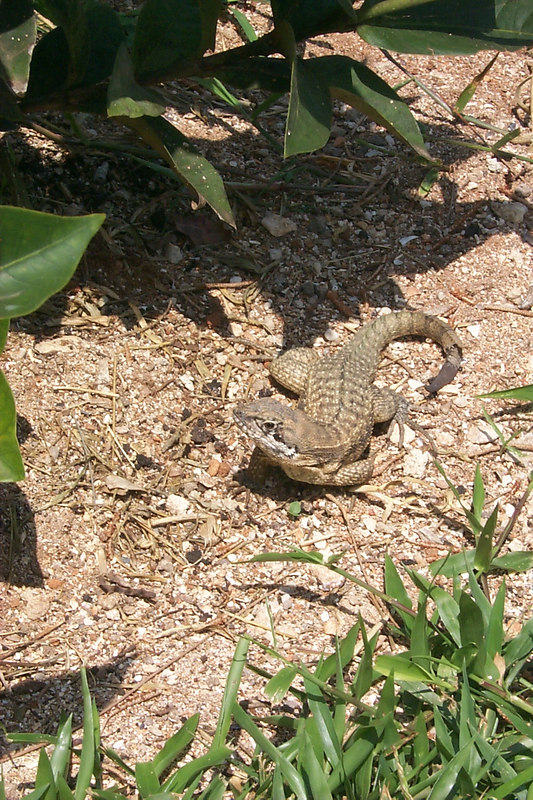 <b>Lizard Just Before Running Away</b>   (Apr 20, 2000, 11:23am)