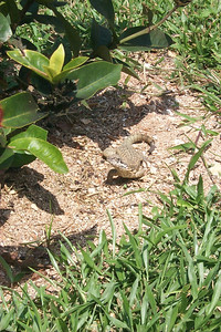 Lizard   (Apr 20, 2000, 11:23am)