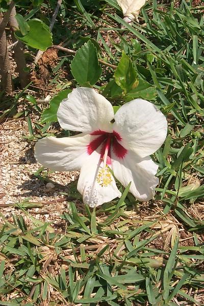 <b>Flower near House</b>   (Apr 20, 2000, 11:31am)