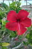 <b>Flower near House</b>   (Apr 21, 2000, 09:27am)