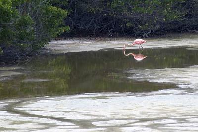 Flamingo and reflection   (Dec 10, 2005, 12:07pm)