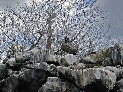 Pelican perched on rocks   (Dec 11, 2005, 09:20am)