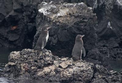 Two penguins   (Dec 10, 2005, 01:34pm)