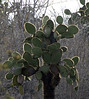 <b>Cactus with sunlit needles</b>   (Dec 09, 2005, 03:36pm)