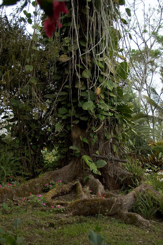 <b>Tree on the grounds of the campground</b>   (Dec 09, 2005, 06:27am)