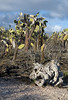 <b>Driftwood and cactus forest</b>   (Dec 09, 2005, 04:50pm)