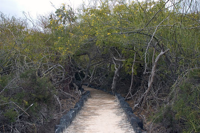 Another section of the nature trail   (Dec 10, 2005, 12:27pm)