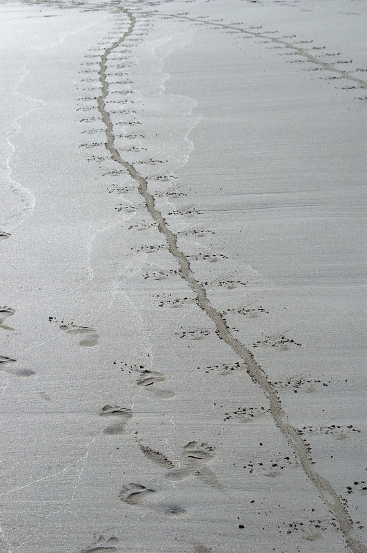 <b>Iguana trails in the sand of Tortuga beach</b>   (Dec 09, 2005, 04:09pm)