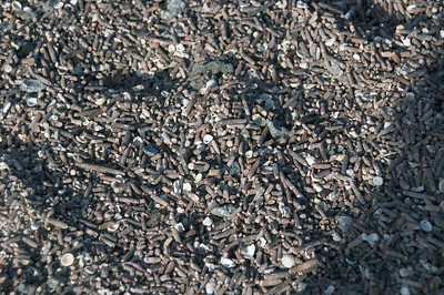 Gravel made from shells and sea urchins spines   (Dec 09, 2005, 04:41pm)