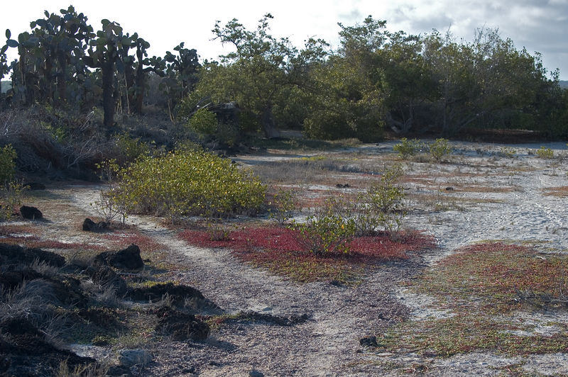 <b>Cactus, sand and red ground cover</b>   (Dec 09, 2005, 04:34pm)