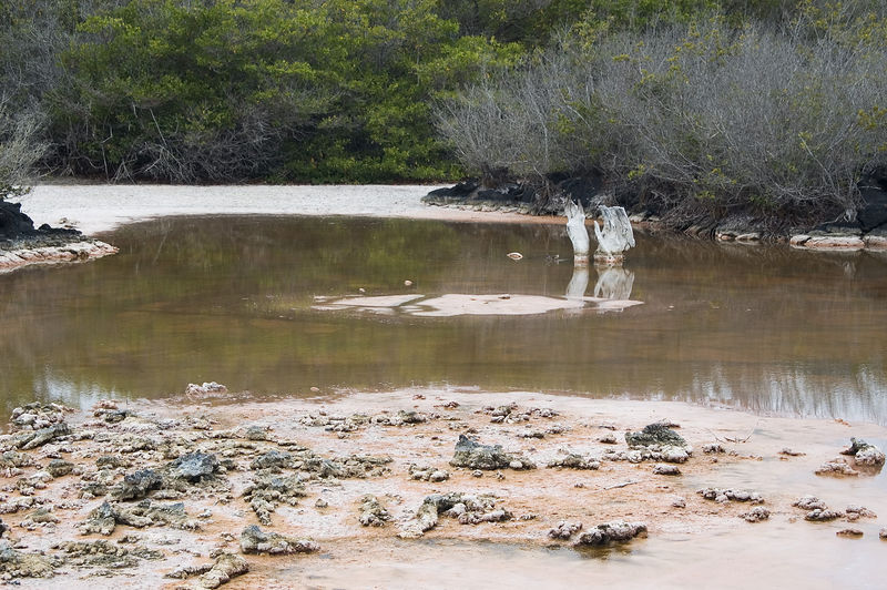 <b>Mud flats next to Isabela Island nature trail</b>   (Dec 10, 2005, 11:56am)