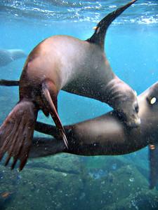 Two sea lions   (Dec 11, 2005, 08:05am)
