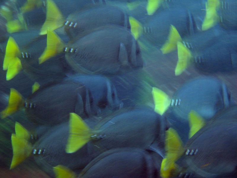 <b>Mosaic of blurry fish</b>   (Dec 11, 2005, 08:18am)
