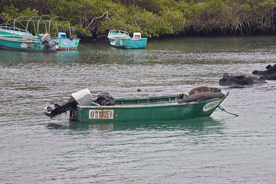 Sea lions resting on a boat   (Dec 10, 2005, 01:11pm)