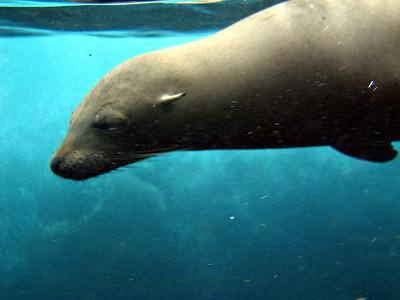 Sea lion's face   (Dec 11, 2005, 08:13am)