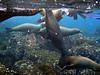 <b>A pack of sea lions</b>   (Dec 11, 2005, 08:20am)