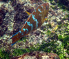 <b>There were some colorful fish</b>   (Dec 11, 2005, 10:03am)