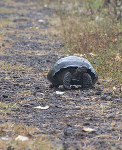 Tortoise coming down the path   (Dec 09, 2005, 09:32am)