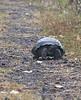 <b>Tortoise coming down the path</b>   (Dec 09, 2005, 09:32am)