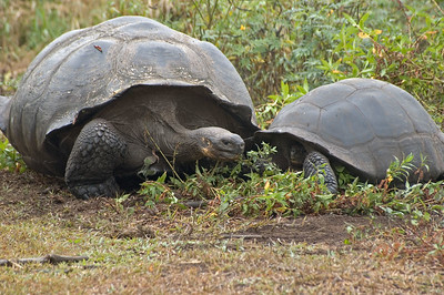 Post coital cuddling between tortoises   (Dec 09, 2005, 10:29am)