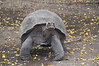 <b>Tortoise coming for a closer look</b>   (Dec 10, 2005, 12:46pm)