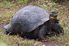 <b>A tortoise tries to gauge my threat</b>   (Dec 09, 2005, 10:43am)