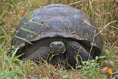 Tortoise in the tall grass   (Dec 09, 2005, 10:08am)