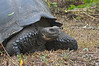 <b>One stern tortoise face</b>   (Dec 09, 2005, 10:33am)