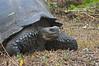 <b>One stern tortoise face</b>   (Dec 09, 2005, 10:33am)