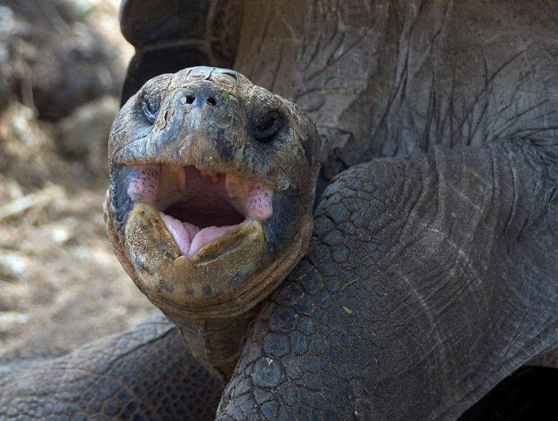 <b>A big tortoise yawn</b>   (Dec 09, 2005, 02:09pm)